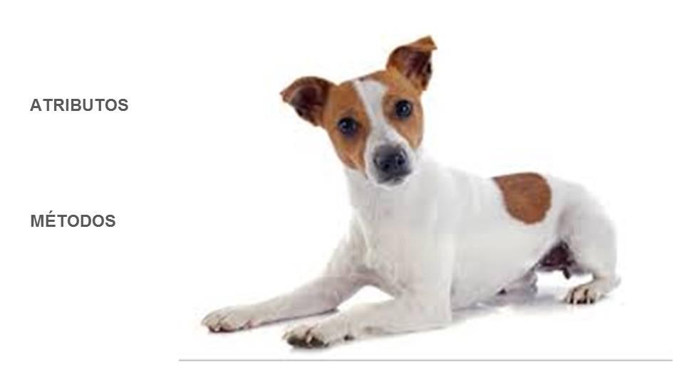 atributos y métodos de un perro